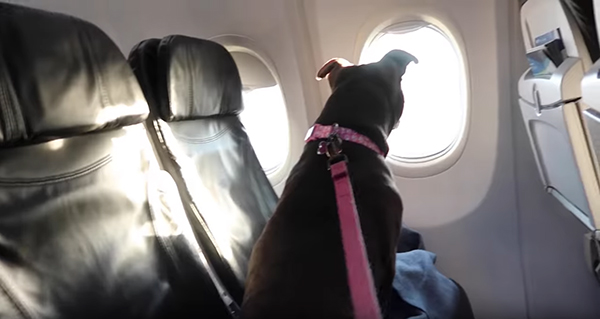 С собакой за границу на самолете