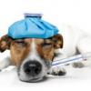 Вакцинация Собак - последнее сообщение от Рентгенолог-практикант