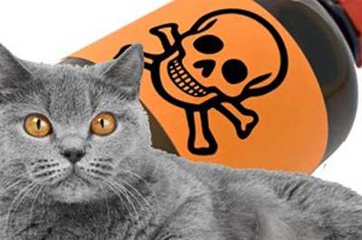Корм для кошек - яд