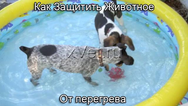 Как Защитить Животное (Кошку, Собаку) От Перегрева В Жару