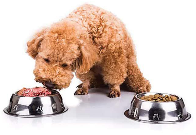 Какой Корм Лучше Для Собаки - Сухой Или Натуральный?