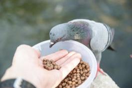 Кормовые добавки для голубей