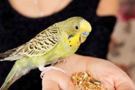 Кормовые добавки для попугаев