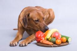 Кормовые добавки для собак