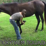 Покупаем Лошадь. На Что Обращать Внимание При Покупке